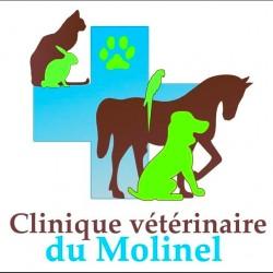 Clinique Vétérinaire Du Molinel