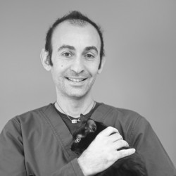 Dr Lorenzo Scarcella